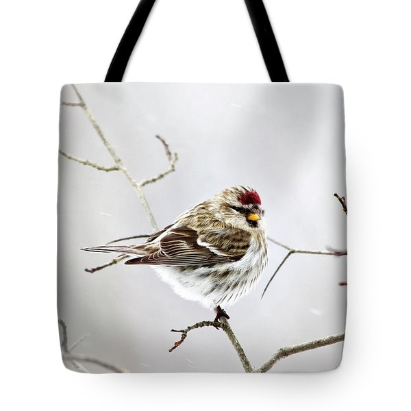 Solitary Redpoll Tote Bag by Christina Rollo