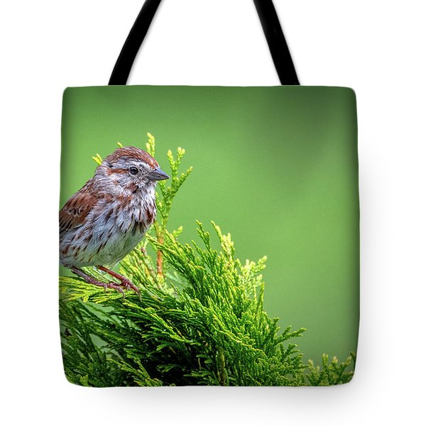 Song Sparrow Perched - Melospiza Melodia Tote Bag
