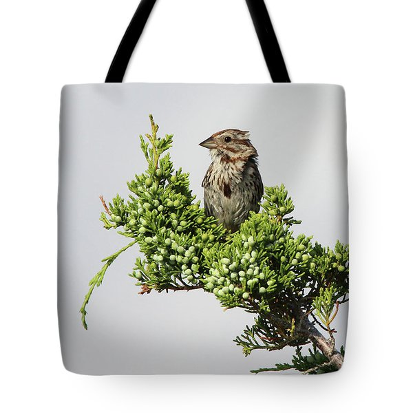 Song Sparrow Port Jefferson New York Tote Bag