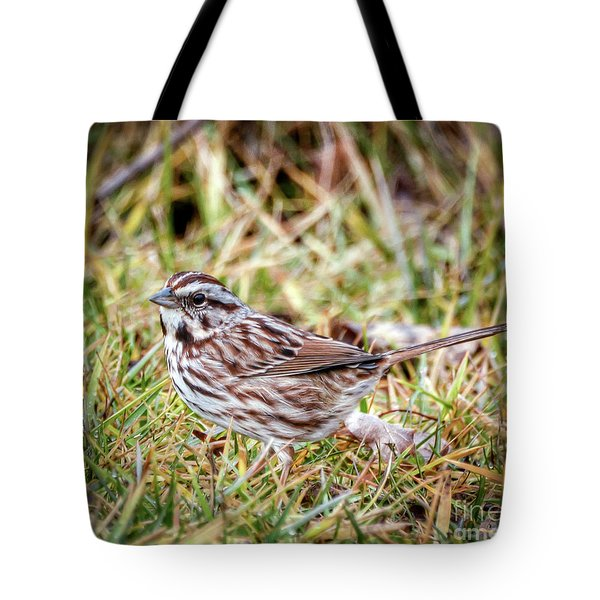 Tote Bag featuring the photograph Song Sparrow Sweetie by Kerri Farley