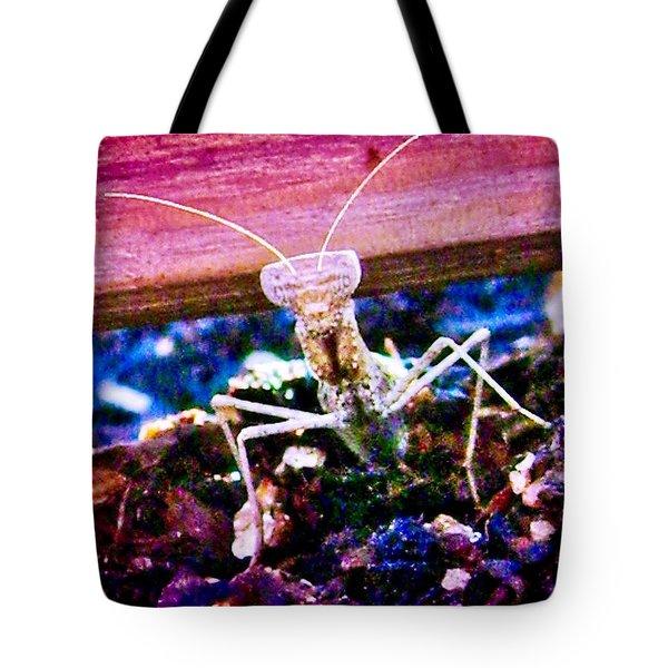 Sonoran Desert Ground Mantis Tote Bag