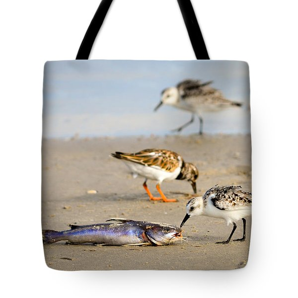 Tote Bag featuring the photograph Sorry Buddy by Debra Martz