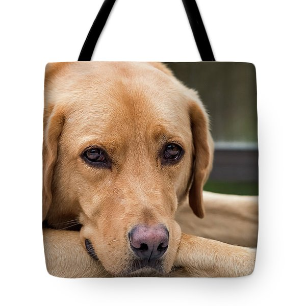 Tote Bag featuring the photograph Soulful Eyes by Kathy King