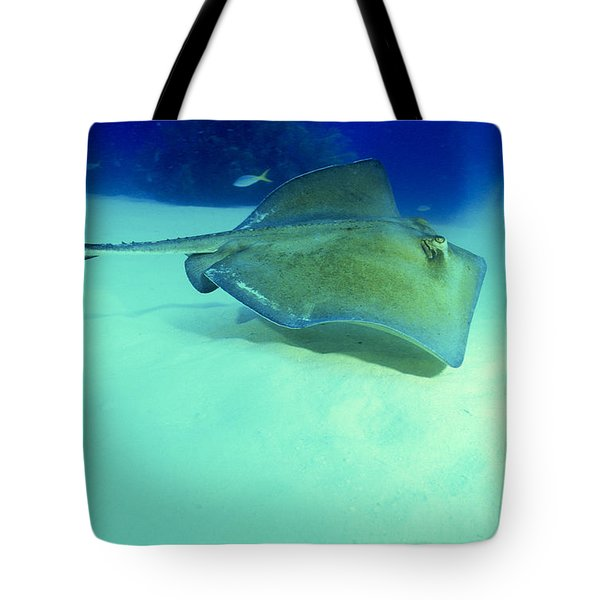 Southern Sting Ray Tote Bag by Gregory Ochocki and Photo Researchers