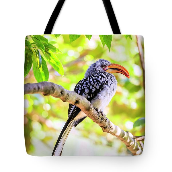 Tote Bag featuring the photograph Southern Yellow Billed Hornbill by Alexey Stiop