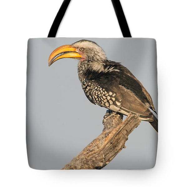 Southern Yellow-billed Hornbill Tockus Tote Bag