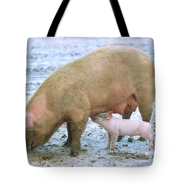 Sow With Piglet Tote Bag by Science Source