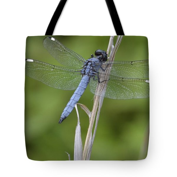 Spangled Skimmer Tote Bag by Randy Bodkins