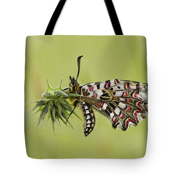 Spanish Festoon Butterfly Tote Bag