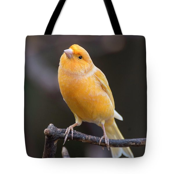 Spanish Timbrado Canary Tote Bag