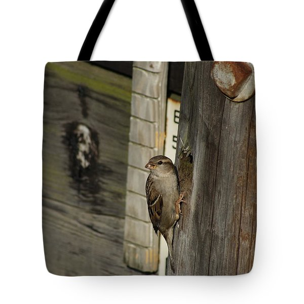 Sparrow In Pier Townhouse Tote Bag