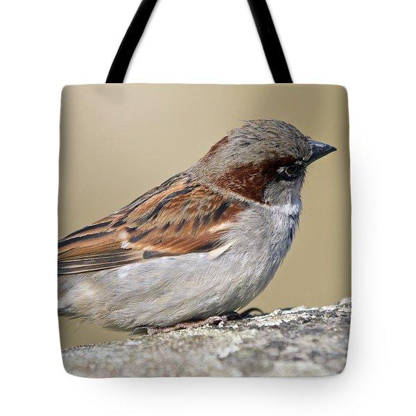 Sparrow Tote Bag by Melanie Viola