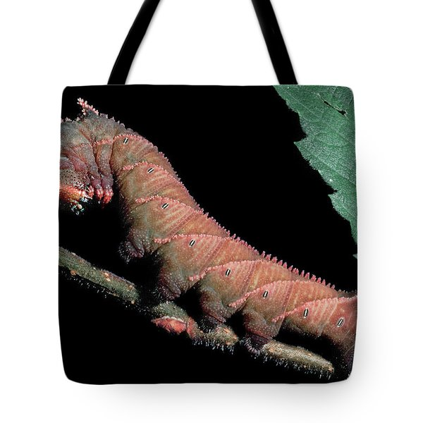 Sphinx Moth Caterpillar Tote Bag