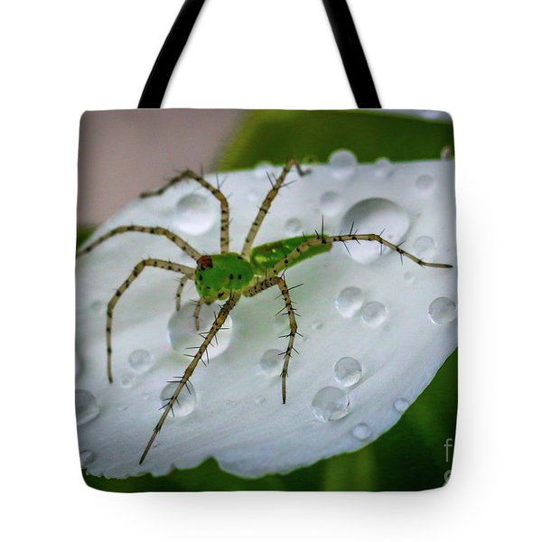 Spider And Flower Petal Tote Bag