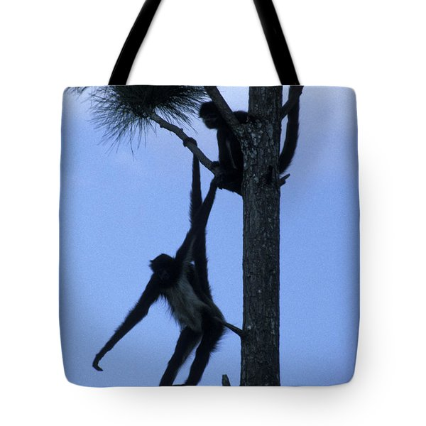 Spider Monkeys Belize Central America Tote Bag