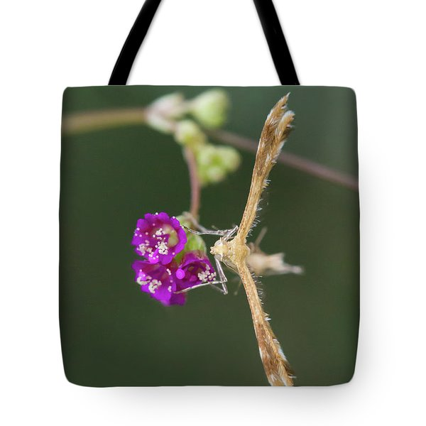 Spiderling Plume Moth On Wineflower Tote Bag