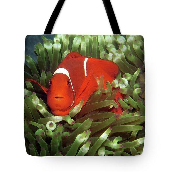 Spinecheek Anemonefish, Indonesia 2 Tote Bag