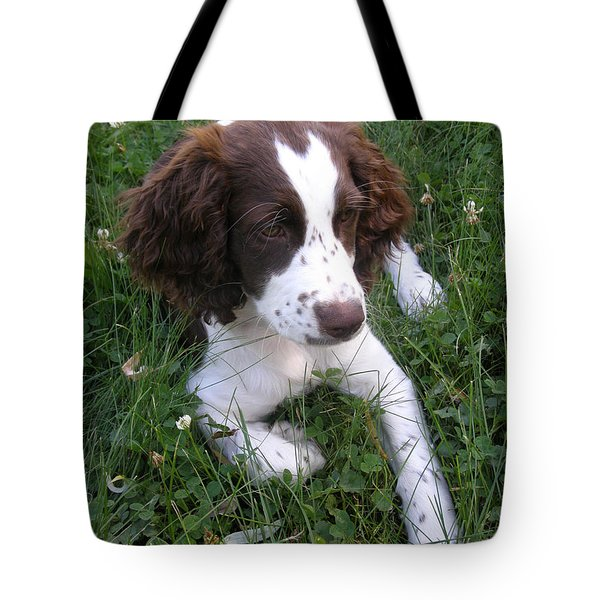 Tote Bag featuring the photograph Spinger Spaniel Pup by Angie Rea