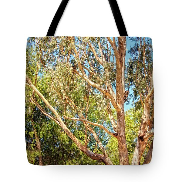 Tote Bag featuring the photograph Spot The Koala, Yanchep National Park by Dave Catley