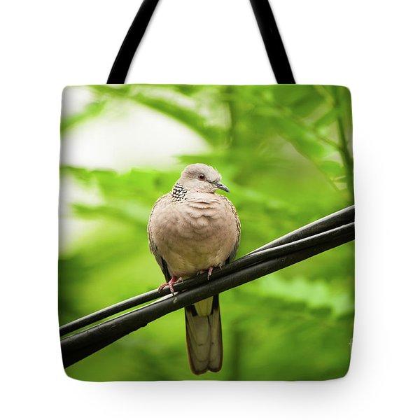 Spotted Dove   Tote Bag by Venura Herath