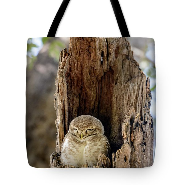Spotted Owlet Tote Bag