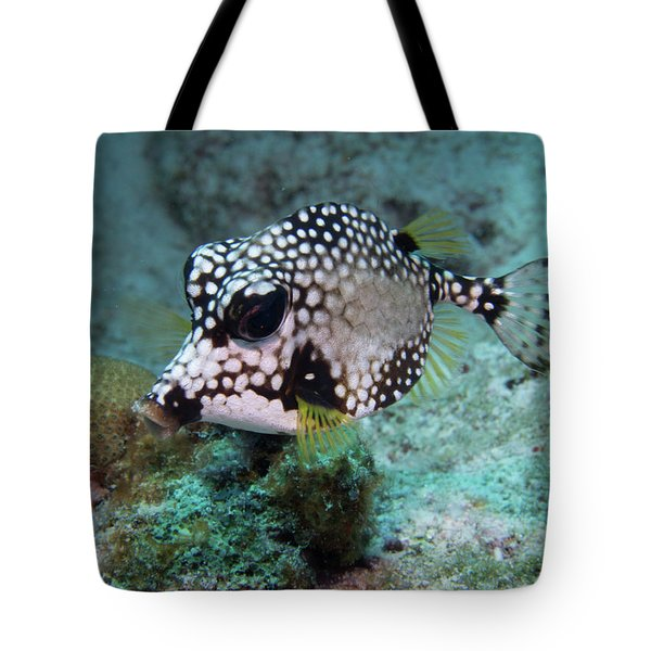 Tote Bag featuring the photograph Spotted Trunkfsh by Jean Noren