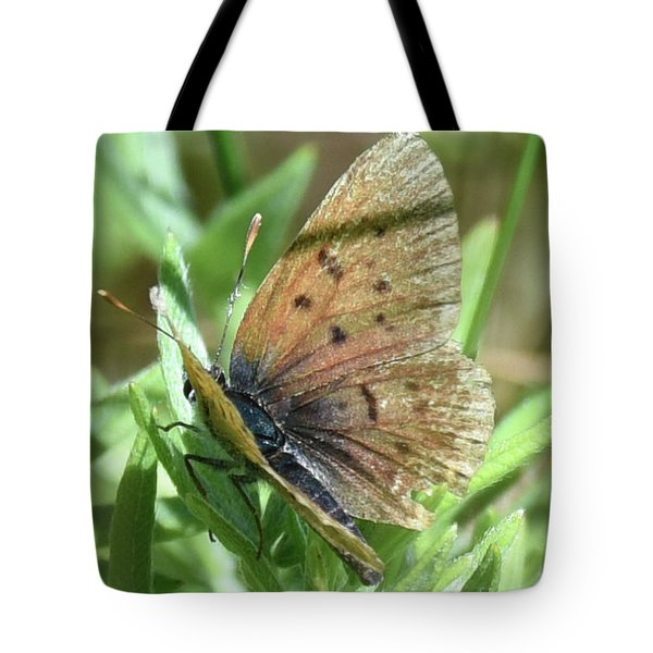 Tote Bag featuring the photograph Spreading Its Wings by Sally Sperry