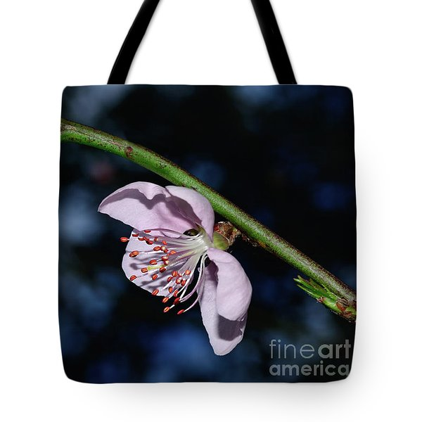 Tote Bag featuring the photograph Spring Blossom At Sunset By Kaye Menner by Kaye Menner