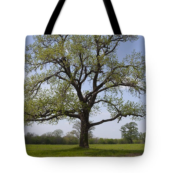 Spring Emerges Tote Bag