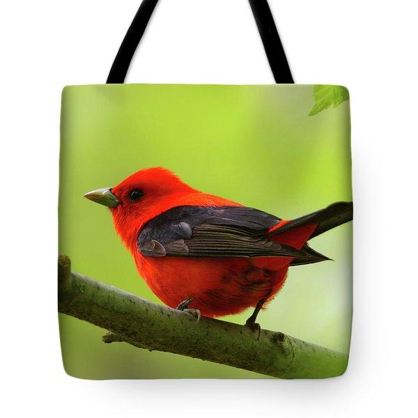 Spring Flame - Scarlet Tanager Tote Bag