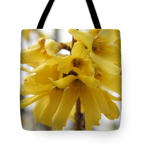 Spring Forsythia Blossoms Tote Bag by Angie Runyan