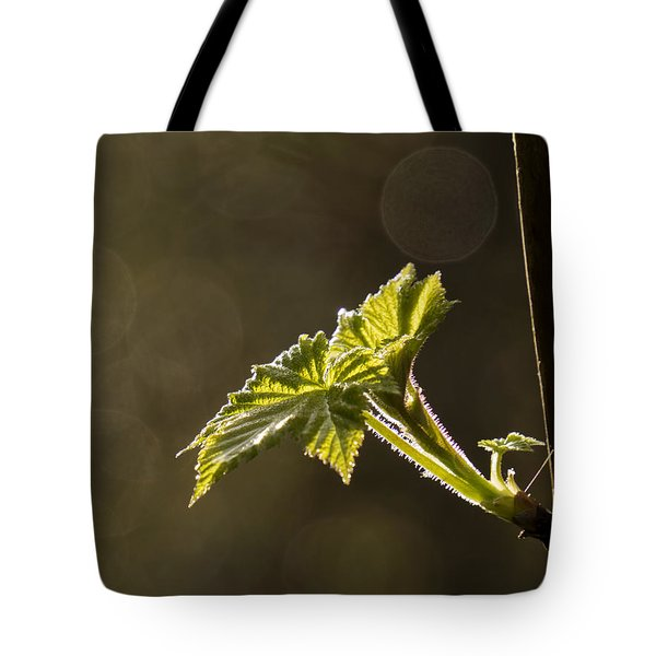 Spring Has Sprung - 365-27 Tote Bag