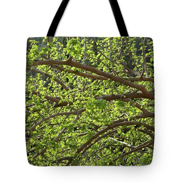 Spring Is Here Tote Bag by Yoel Koskas