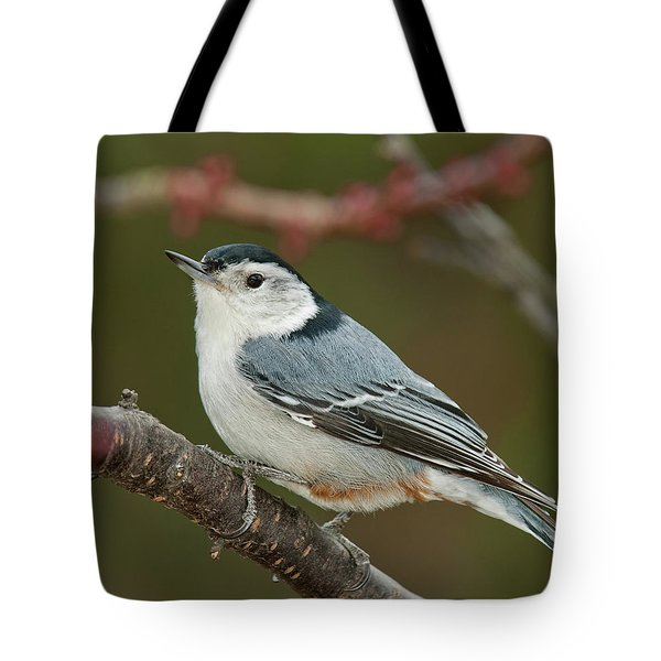 Spring Nuthatch 2017 Tote Bag by Lara Ellis