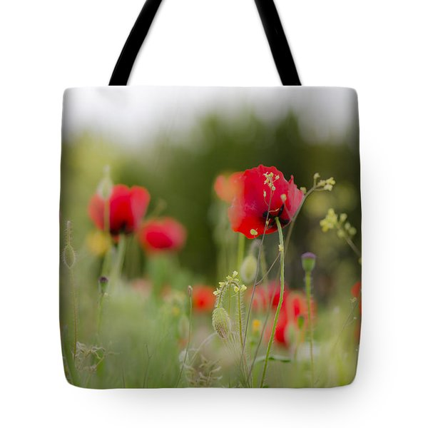 Spring Poppies  Tote Bag