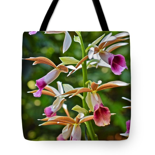Spring Show 15 Nun's Orchid 1 Tote Bag