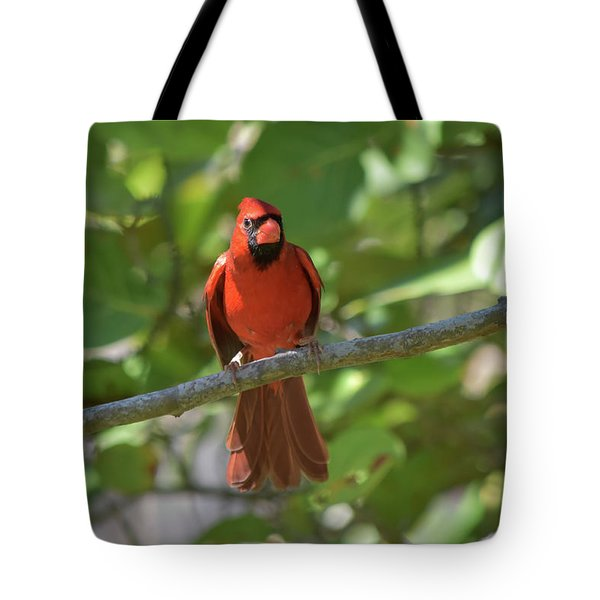 Spring Training Cardinal Tote Bag