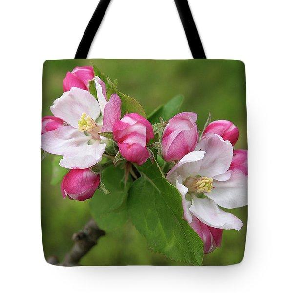 Springtime Apple Blossom Tote Bag by Gill Billington