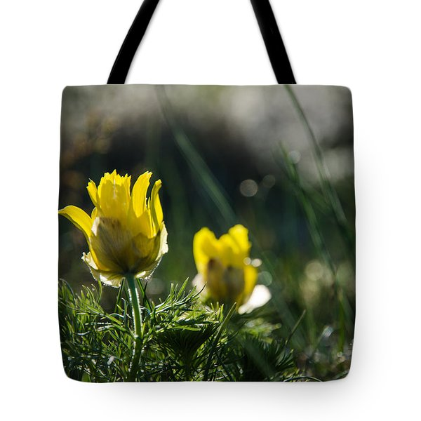 Tote Bag featuring the photograph Springtime Beauty Flower by Kennerth and Birgitta Kullman