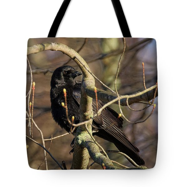 Tote Bag featuring the photograph Springtime Crow by Bill Wakeley