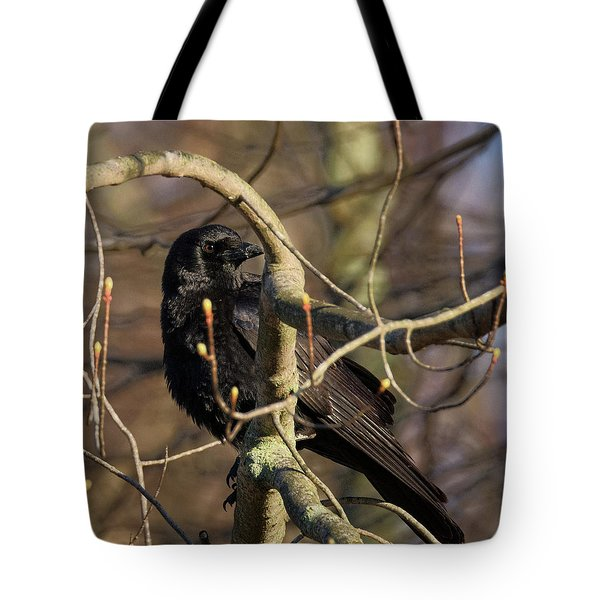 Tote Bag featuring the photograph Springtime Crow Square by Bill Wakeley