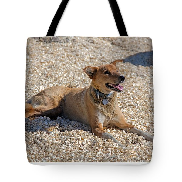 Sprint Racing Iditeron Sled Dog Tote Bag by Allan Levin