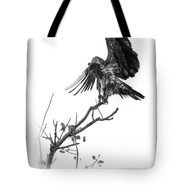 Squaw Creek Red-tail Tote Bag