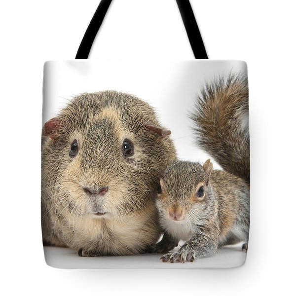 Squirrel And Guinea Tote Bag
