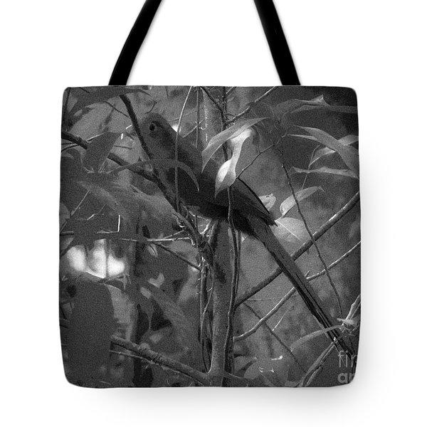 Squirrel Cuckoo  Tote Bag