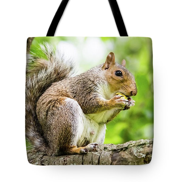 Squirrel Eating On A Branch Tote Bag
