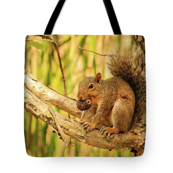 Squirrel In A Tree In The Marsh Tote Bag