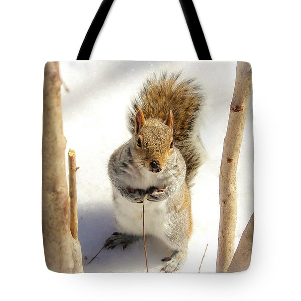 Squirrel In Snow Tote Bag
