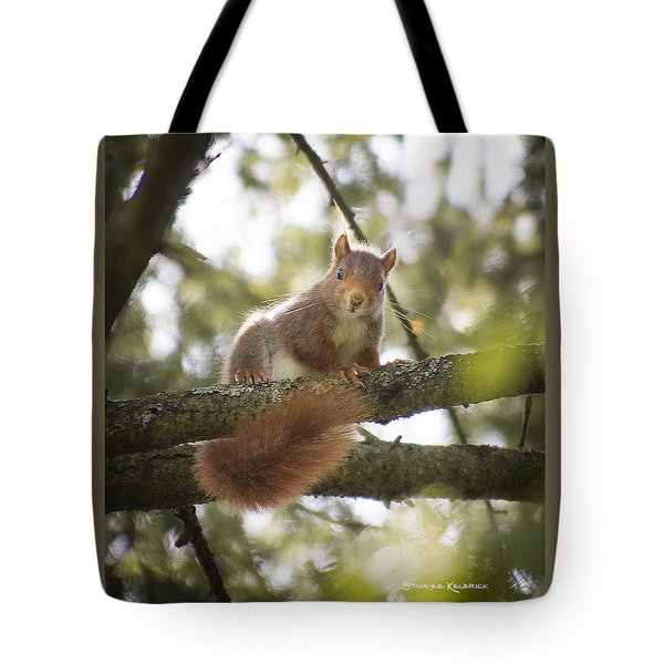 Tote Bag featuring the photograph Squirrel On The Spot by Stwayne Keubrick