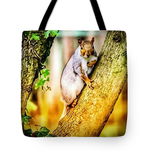 Tote Bag featuring the photograph Squirrel Pose  by Cliff Norton